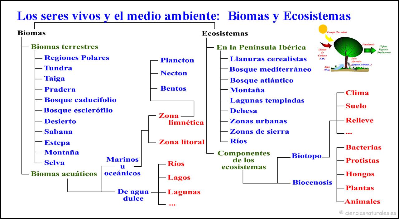 Eccosistemas y Biomas