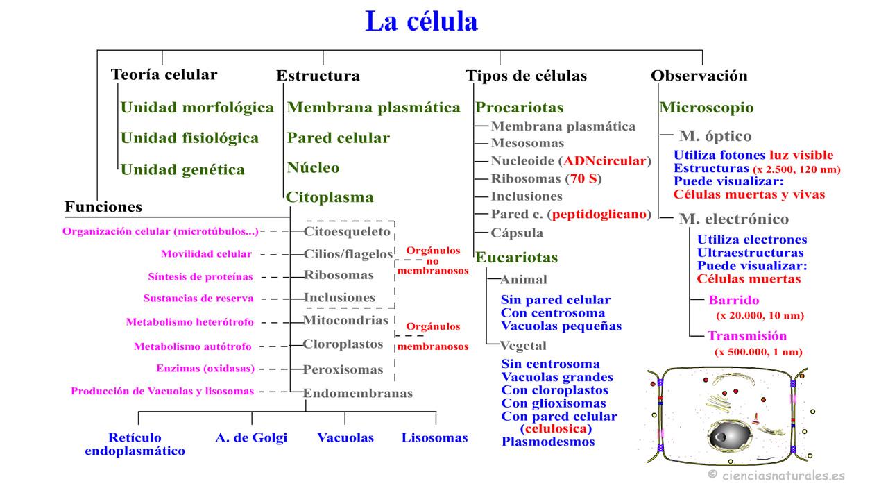 Panel De Mapas Conceptuales De José Antonio Borreguero Rolo