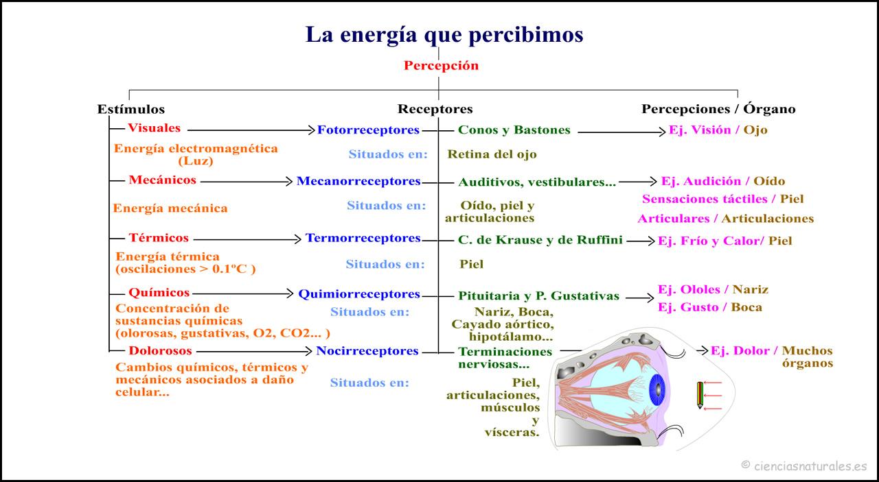 La Energía que Percibimos