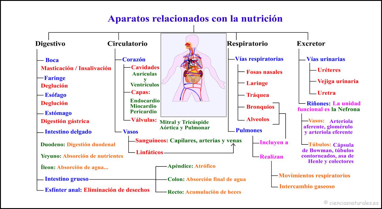 Aparatos Relacionados con la Nutrición